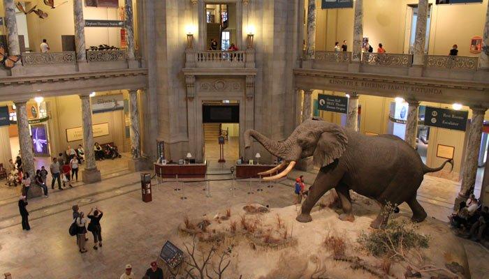 Museo Storia Naturale New York.Smithsonian S Museum Of Natural History Washington