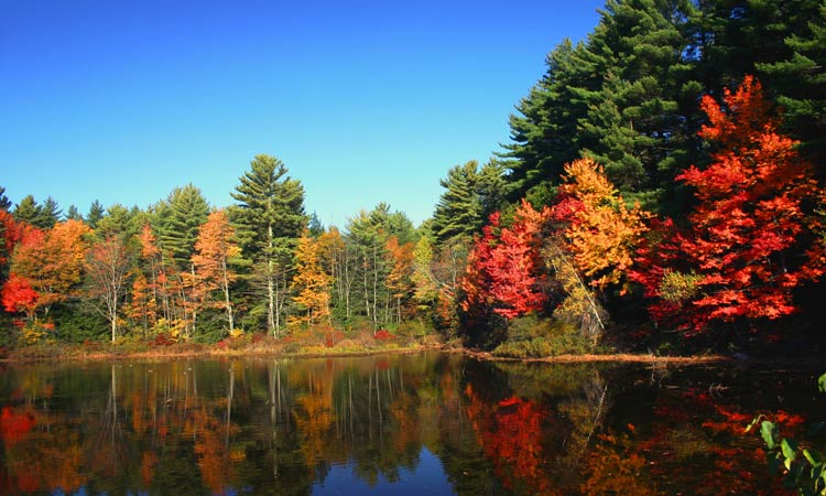 new england autunno