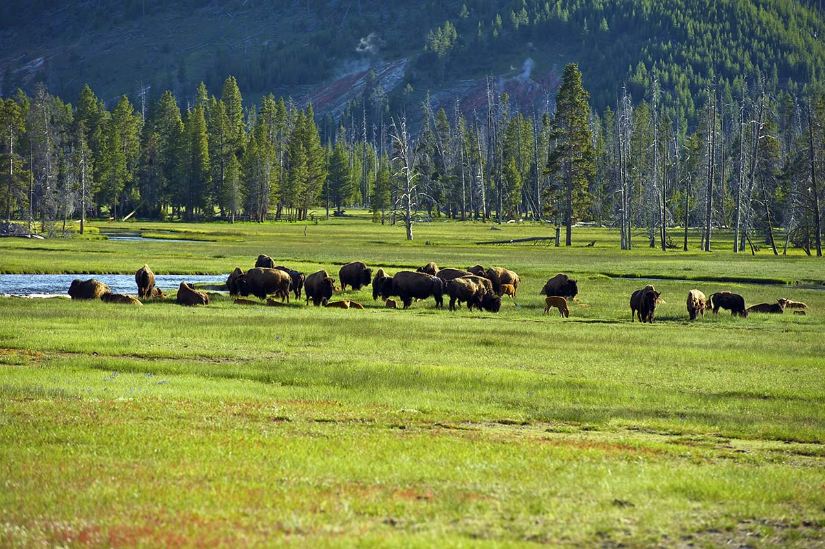 yellowstone itinerario