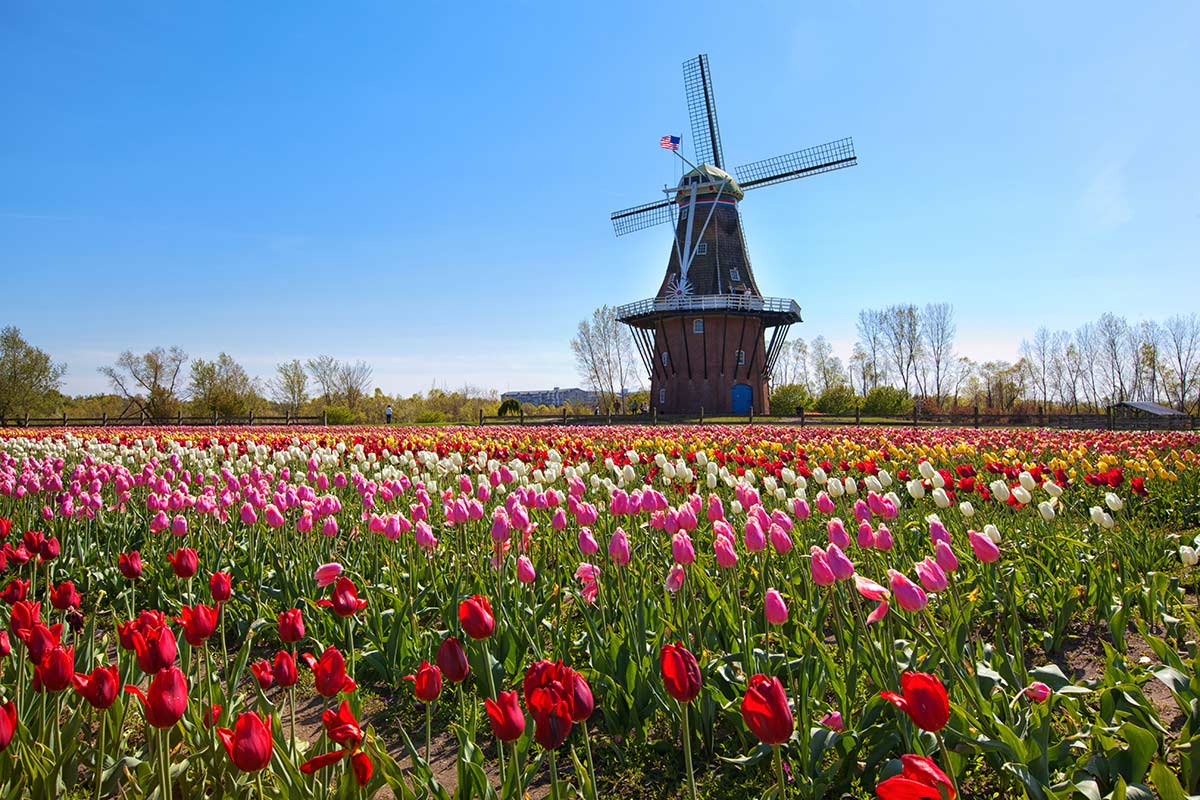mulino holland michigan