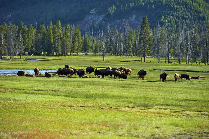 yellowstone idaho
