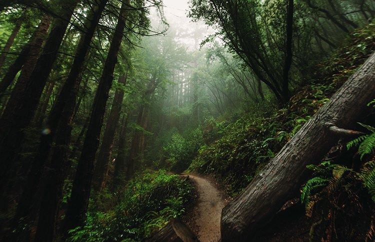 california-muir-woods-san-francisco