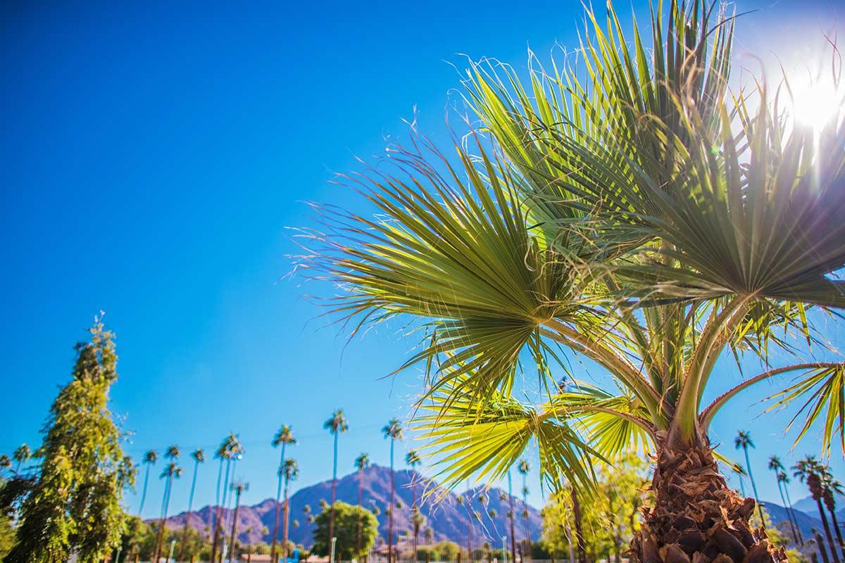 itinerario california 15 giorni