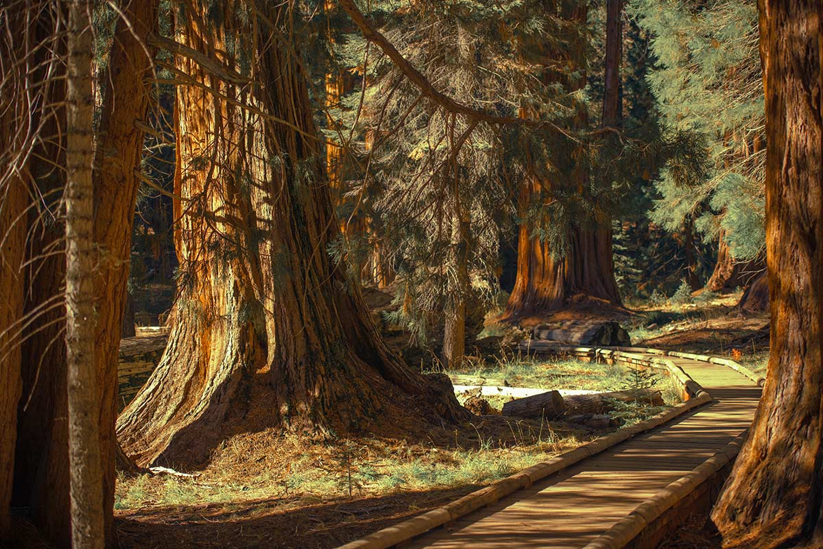 kings canyon california visitare